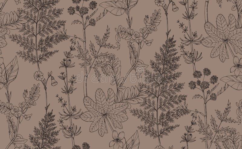 Bezszwowy wektoru wzór ziele i kwiaty royalty ilustracja