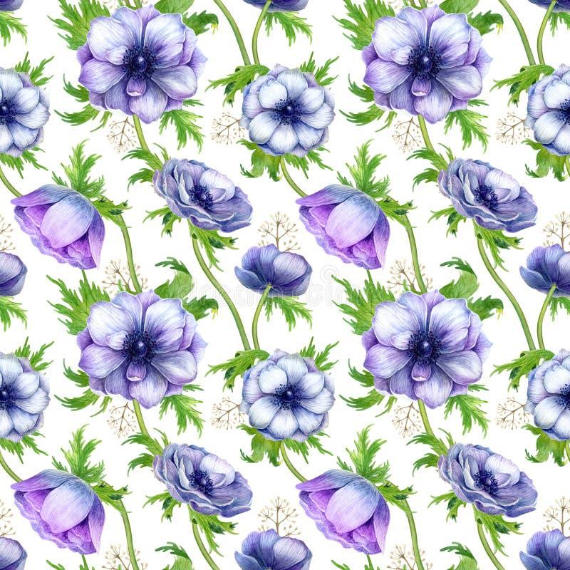 Bezszwowy wzór z akwarela białym purpurowym anemonem kwitnie Wiosna kwiecisty projekt dla ślubnego zaproszenia zdjęcie royalty free