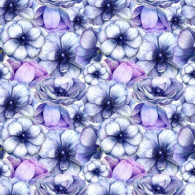 Bezszwowy wzór z akwarela białym purpurowym anemonem kwitnie Wiosna kwiecisty projekt dla ślubnego zaproszenia obrazy royalty free