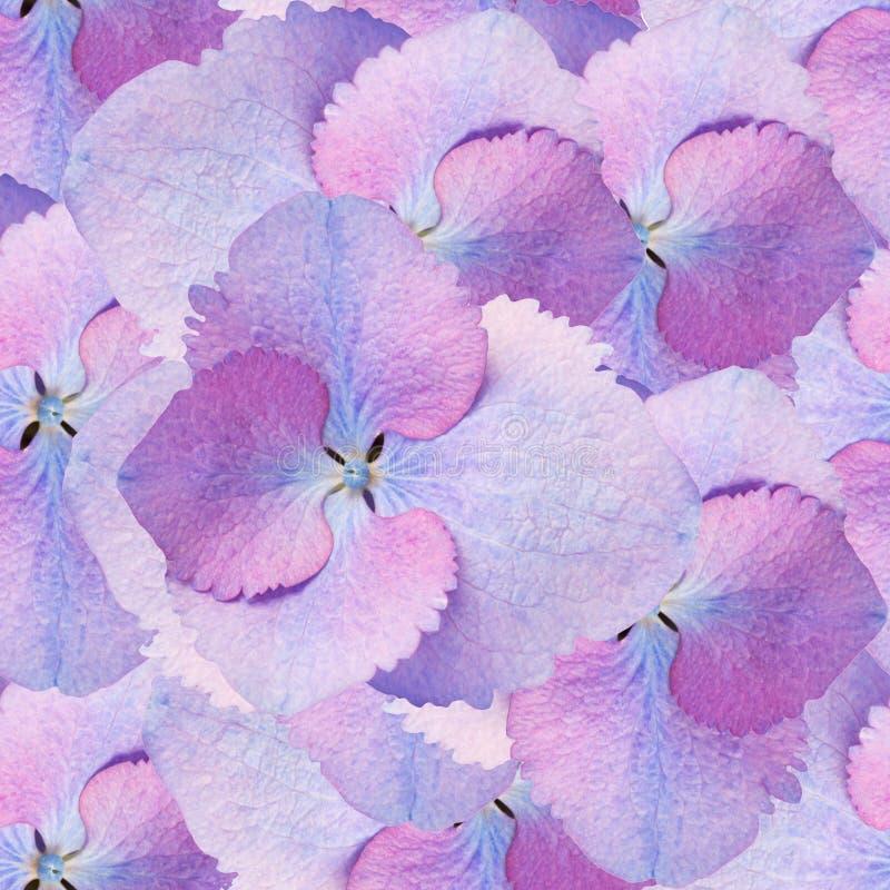 Bezszwowy wzór hortensja kwiaty ilustracja wektor