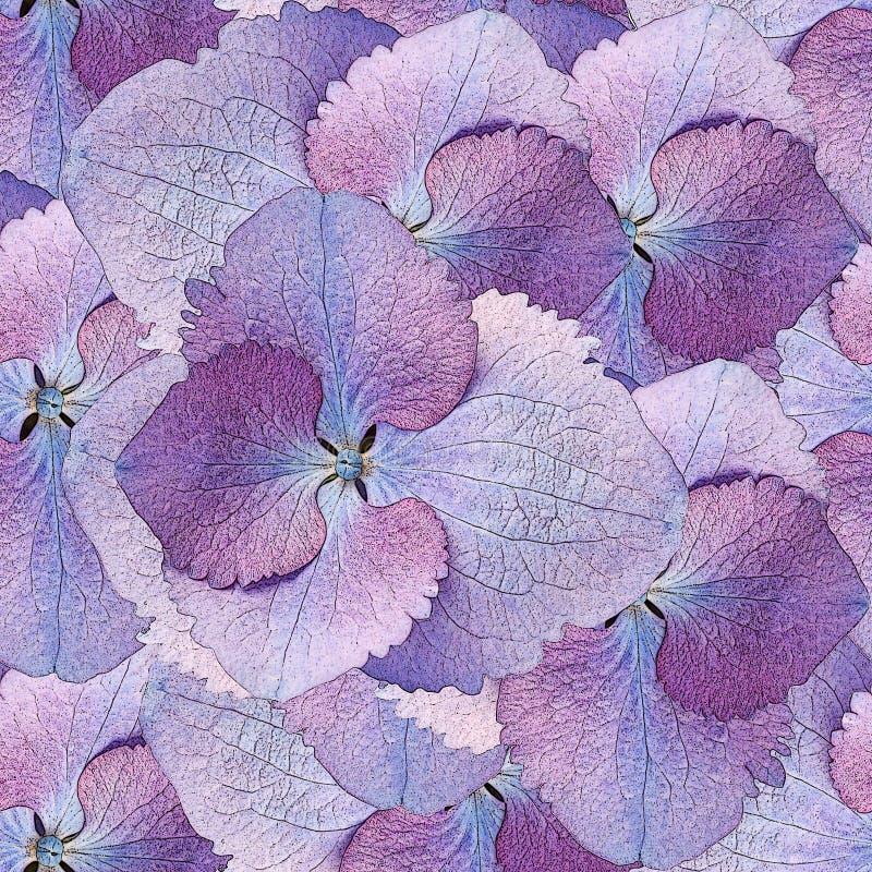 Bezszwowy wzór hortensja kwiaty ilustracji