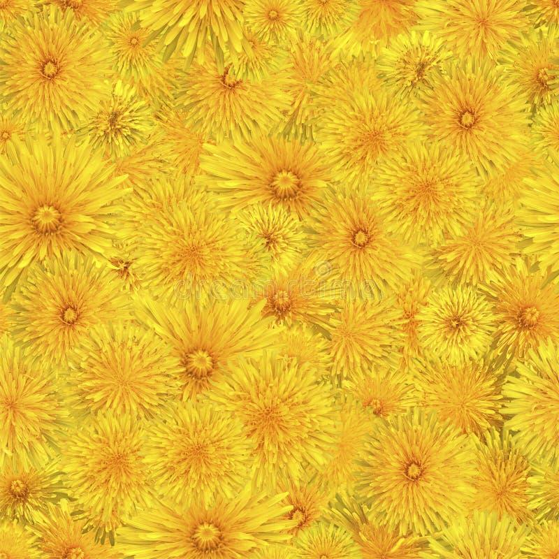 Bezszwowy wzór kwitnący dandelions zdjęcie stock