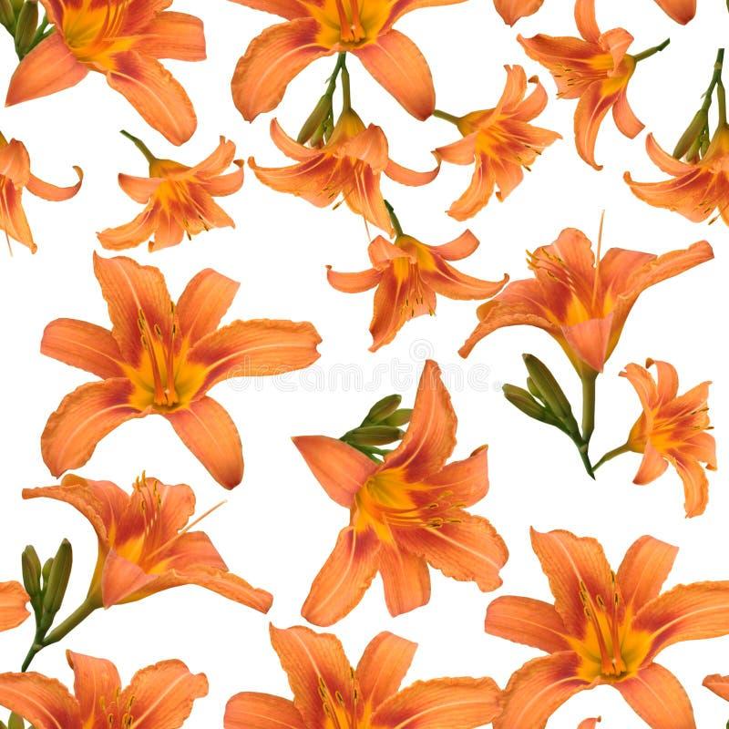 Bezszwowy wzór piękne pomarańczowe leluje na białym tle zdjęcia royalty free