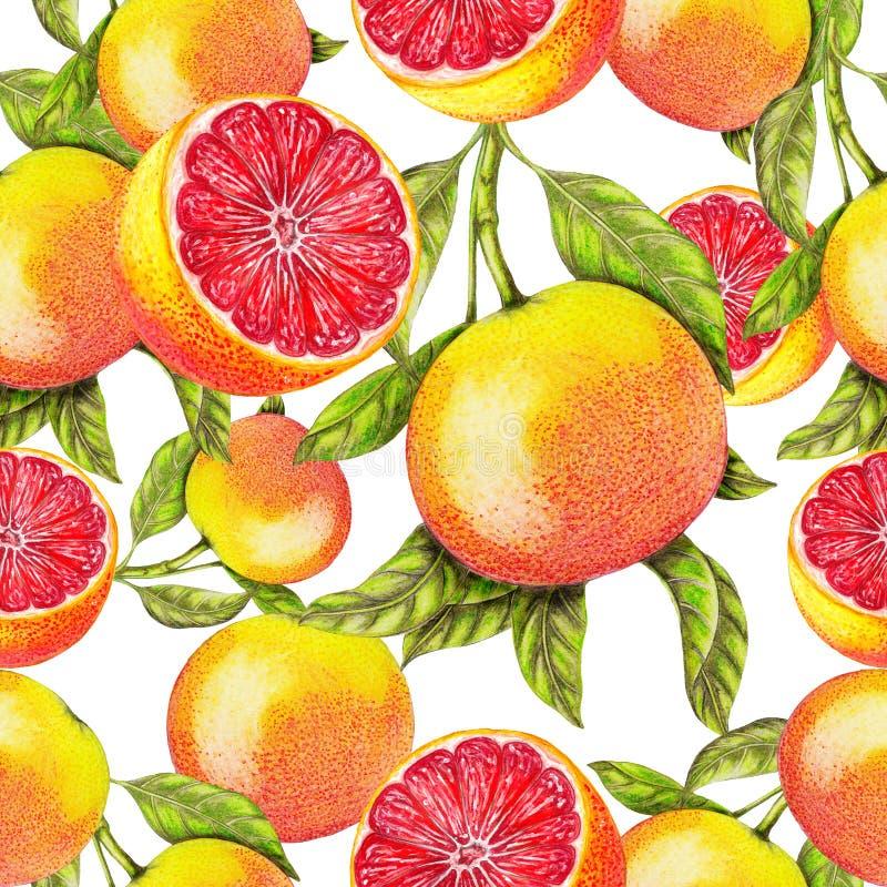 Bezszwowy wzór ręka rysujący grapefruitowy ilustracja wektor