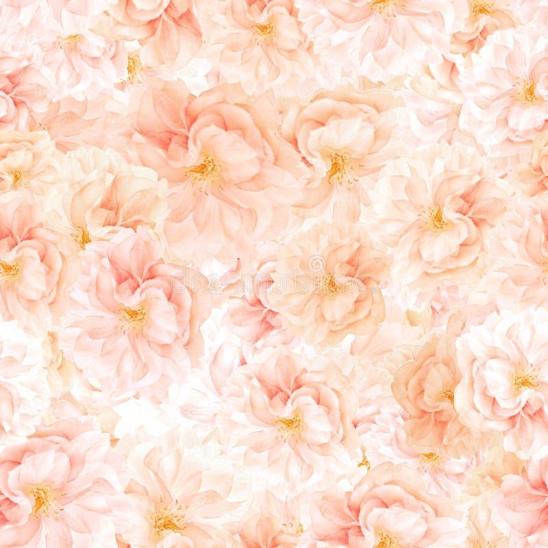 BEZSZWOWY wzór Sakura okwitnięcia obraz stock