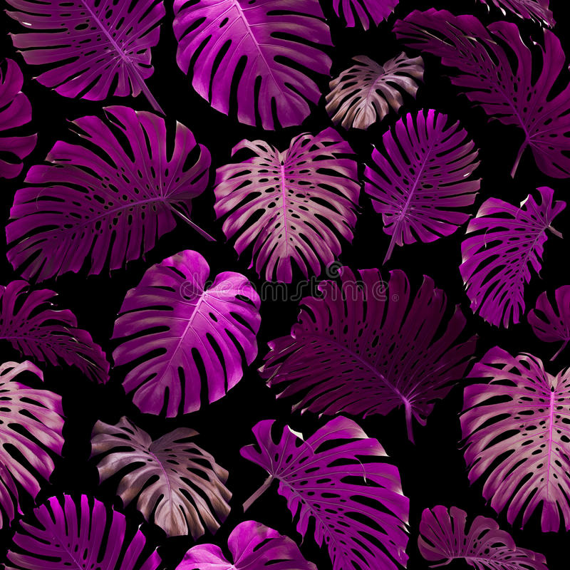 Bezszwowy wzór tropikalni liście fotografia stock