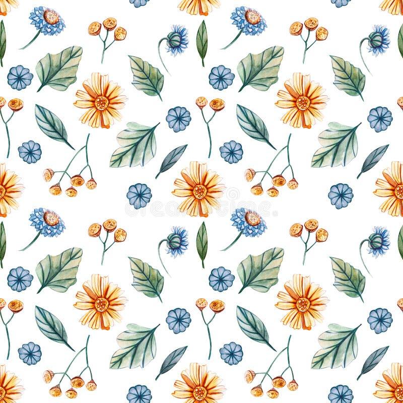 Bezszwowy wzór z akwarelą kwitnie z żółtymi stokrotkami i błękitnymi cornflowers na białym tle ilustracji