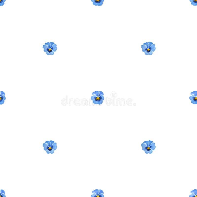 Bezszwowy wzór z błękitnymi Pansies odizolowywającymi na białym tle ilustracji