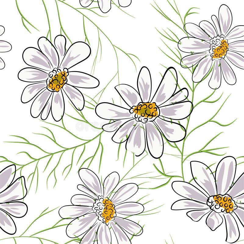 Bezszwowy wzór z chamomile, rumianek kwitnie na białym tle royalty ilustracja