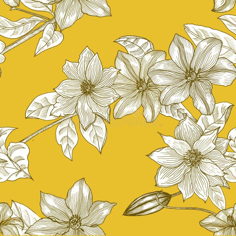 Bezszwowy wzór z clematis na żółtym tle r?ka patroszona grafit ilustracji