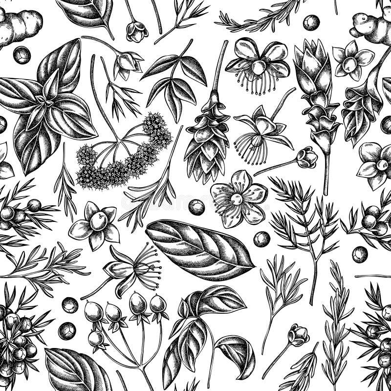 Bezszwowy wzór z czarny i biały arcydzięglem, basil, jałowiec, hypericum, rozmaryn, turmeric ilustracji