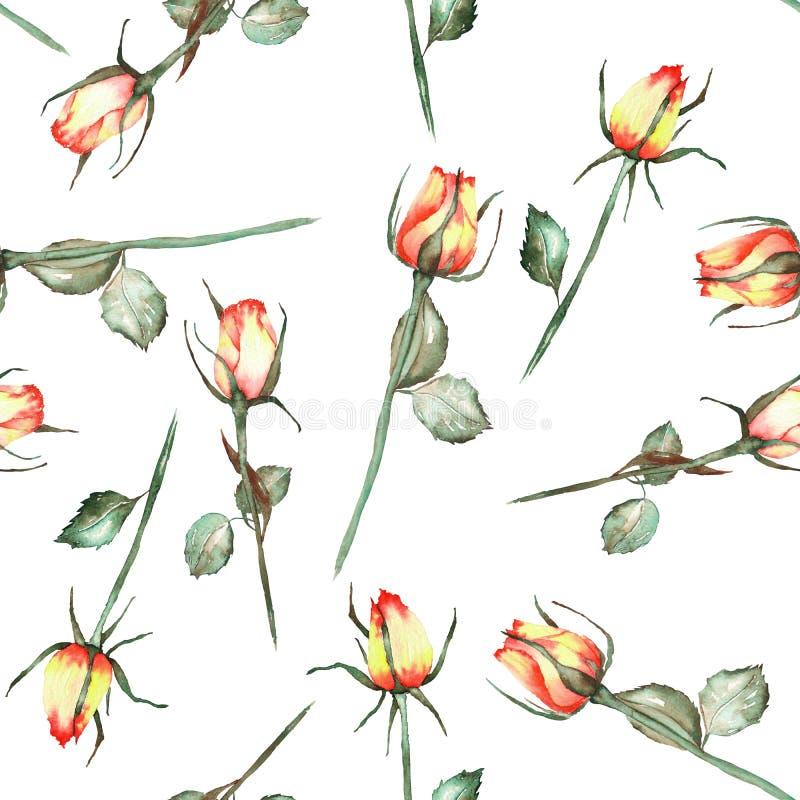 Bezszwowy wzór z czerwonymi i żółtymi akwareli pięknymi różami na białym tle royalty ilustracja
