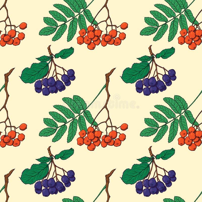 Bezszwowy wzór z czerwonymi i czarnymi rowan jagodami ilustracji