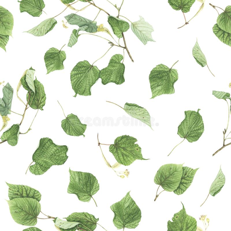 Bezszwowy wzór z gałąź i liśćmi lipowy, akwarela obraz fotografia royalty free