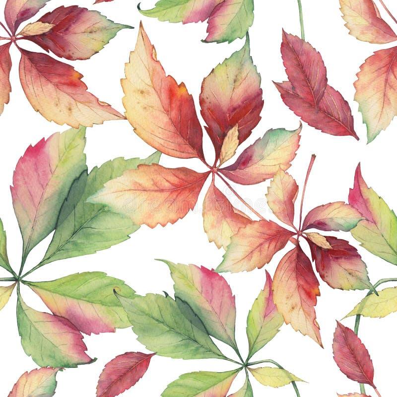 Bezszwowy wzór z gronowymi liśćmi obraz stock