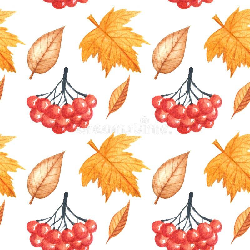 Bezszwowy wzór z jesień liśćmi i rowan rysunek akwarelą, ręka rysujący elementy fotografia royalty free