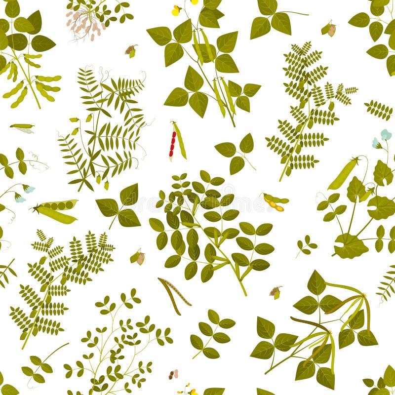 Bezszwowy wzór z legumes roślinami, liście, strąki i kwiaty swój, royalty ilustracja