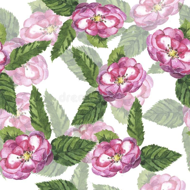 Bezszwowy wzór z ogrodowych menchii różami beak dekoracyjnego latającego ilustracyjnego wizerunek swój papierowa kawałka dymówki  ilustracja wektor