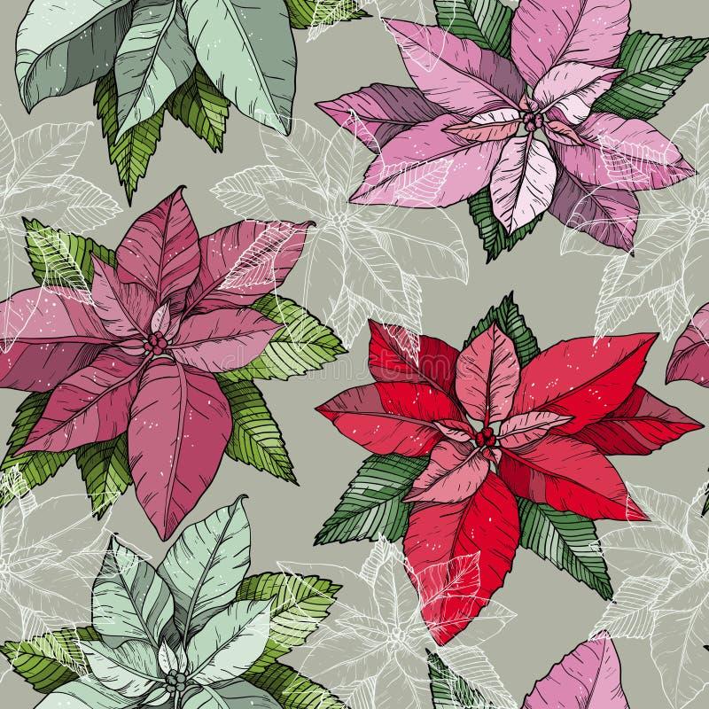 Bezszwowy wzór z piękną i kolorową Bożenarodzeniową poinsecją kwitnie ilustracja wektor