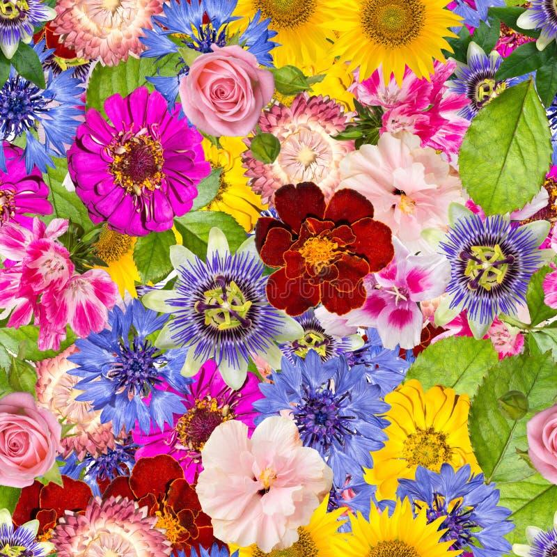 Bezszwowy wzór z różnymi wiosna kwiatami ilustracji