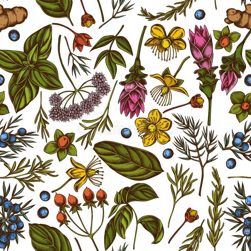 Bezszwowy wzór z ręką rysującą barwił arcydzięgiel, basil, jałowiec, hypericum, rozmaryn, turmeric royalty ilustracja