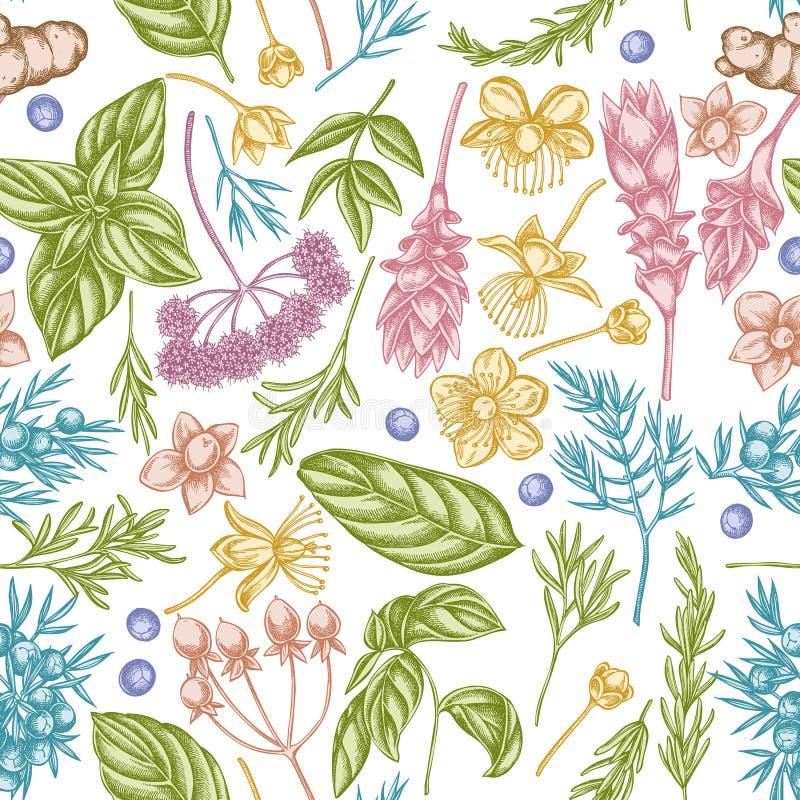 Bezszwowy wzór z ręka rysującym pastelowym arcydzięglem, basil, jałowiec, hypericum, rozmaryn, turmeric royalty ilustracja