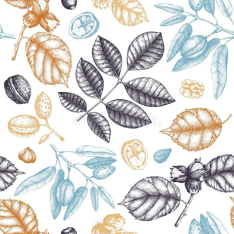 Bezszwowy wzór z ręki rysować dokrętkami Rocznika hazelnut, orzech włoski, migdałowe ilustracje Grawerujący stylowy żywności orga royalty ilustracja