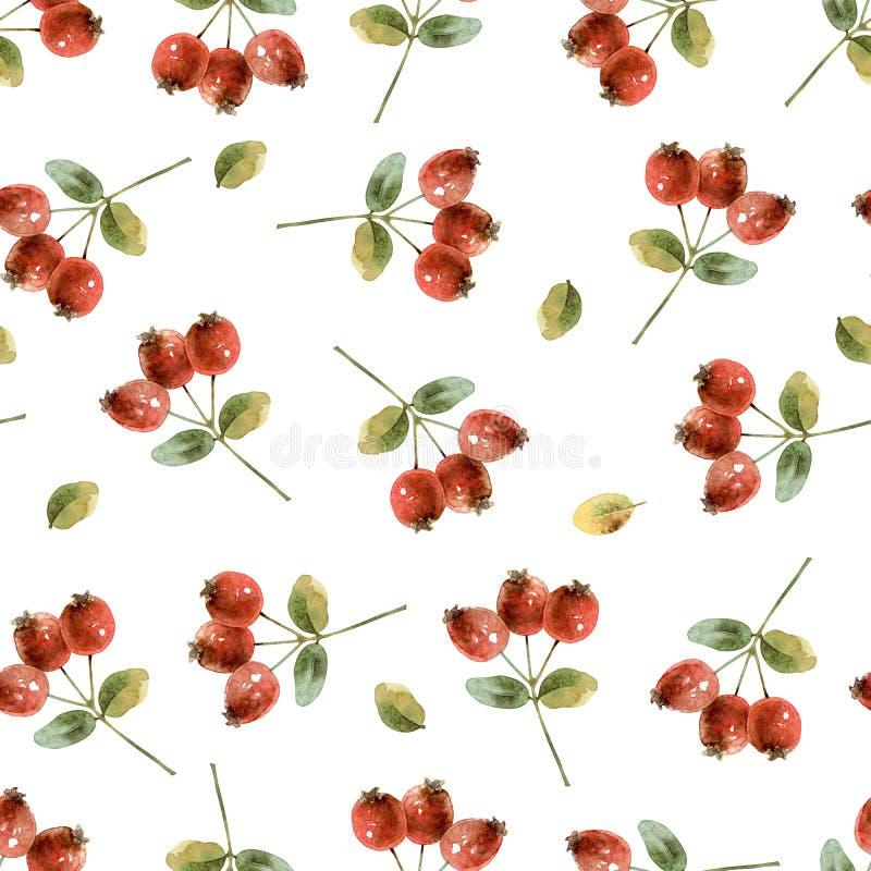 Bezszwowy wzór z rosehip zdjęcia stock