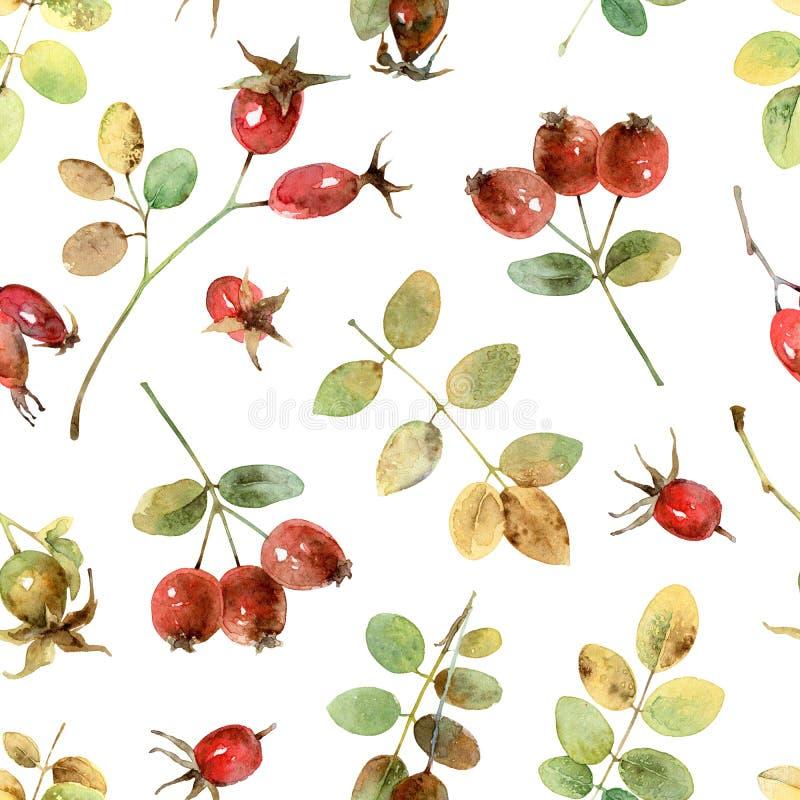 Bezszwowy wzór z rosehip ilustracja wektor