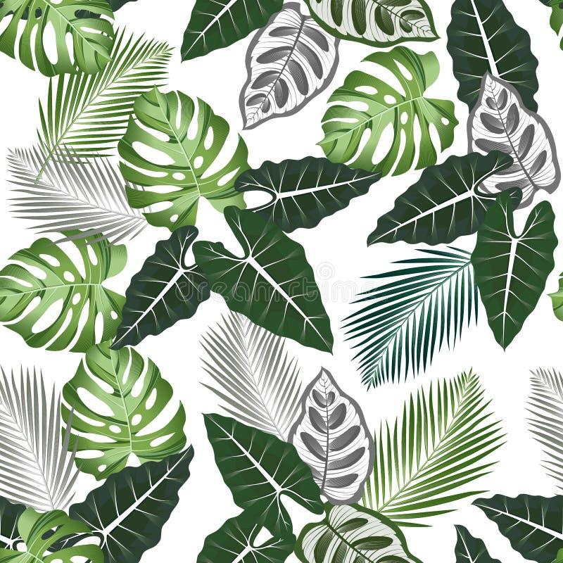 Bezszwowy wzór z tropikalnymi liśćmi: alocasia, palmy, monstera, dżungla liścia wektoru wzoru bielu bezszwowy tło swimwear ilustracji
