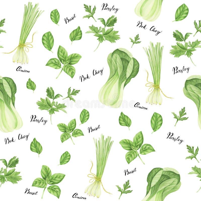 Bezszwowy wzór zieleni warzywa z literowaniem: cebula, pietruszka, basil i bok choy, akwarela obraz royalty ilustracja