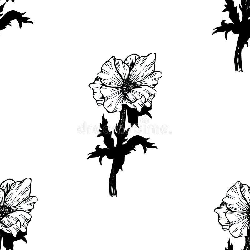 Bezszwowy wz?r z bukietami wildflowers w wie?niaku puszkuje i florariums z sukulentami, odizolowywaj?ca r?ka rysuj?ca w a ilustracji
