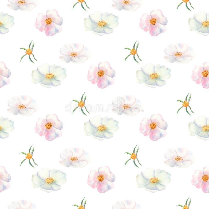 bezszwowy wzoru Kwiaty i owoc różana biodro akwarela Kwiat ilustracje Artystyczni bukiety kwiaty, wianki, poślubia ilustracji