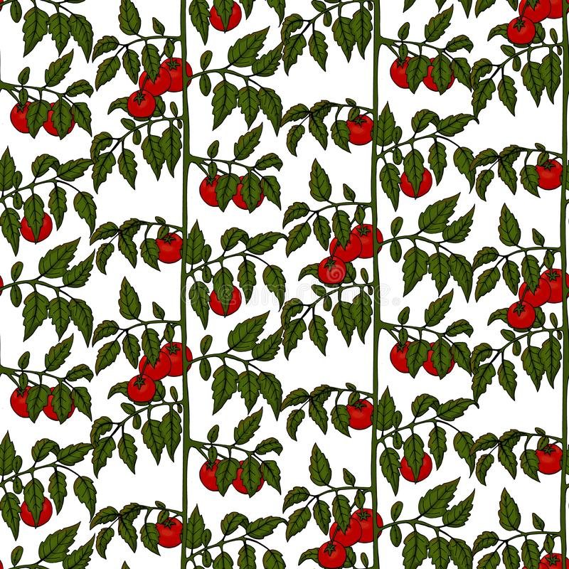 bezszwowy wzoru pomidorowi krzaki royalty ilustracja