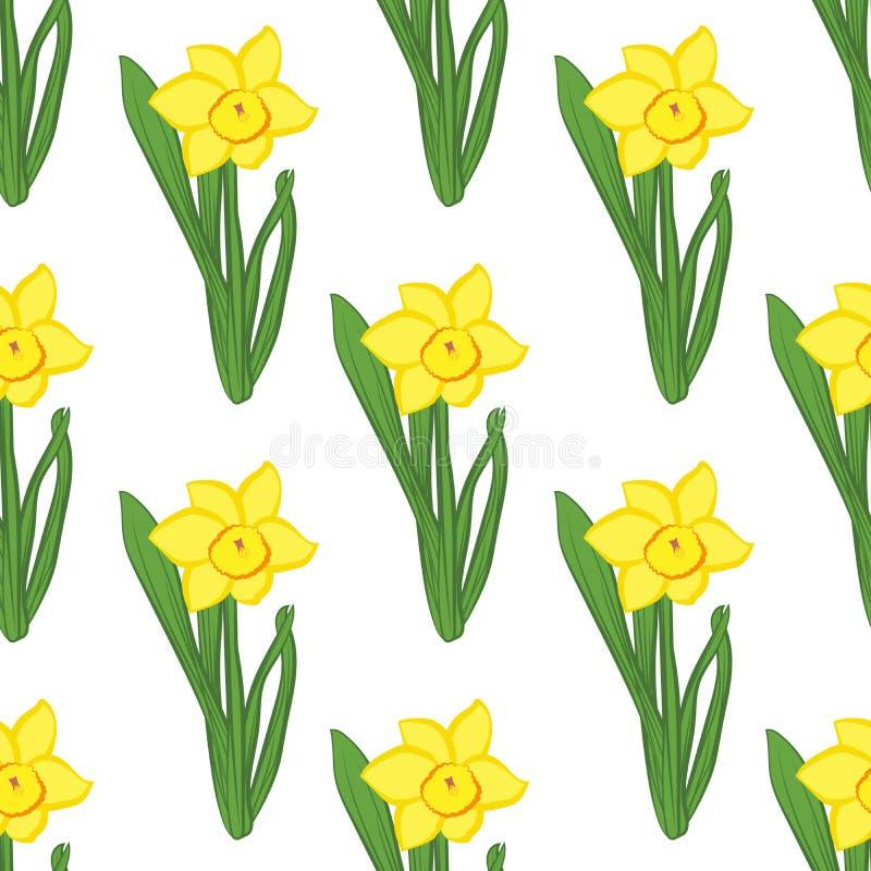 bezszwowy wzoru Zielona trawa z żółtym narcyzem kwitnie ten sam rozmiar odizolowywających na bielu również zwrócić corel ilustrac royalty ilustracja