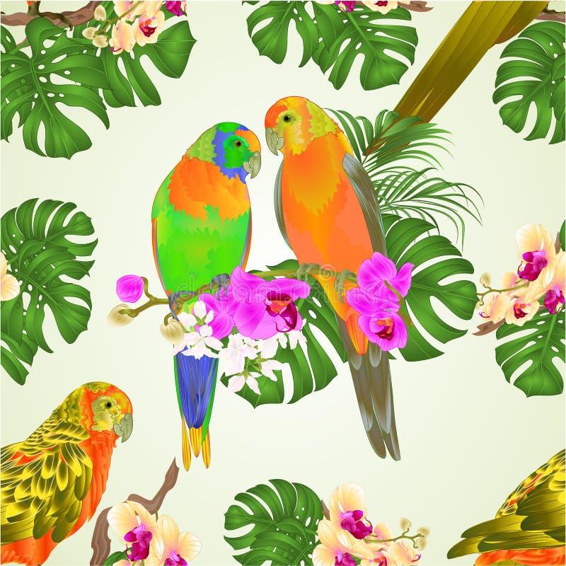 Bezszwowych tekstury słońca Conure papug tropikalni egzotyczni ptaki z pięknymi orchideami i filodendronu wektorowym ilustracyjny ilustracji