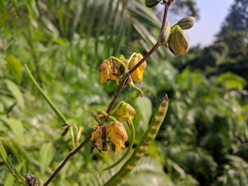 Bezużyteczne rośliny zdjęcia stock
