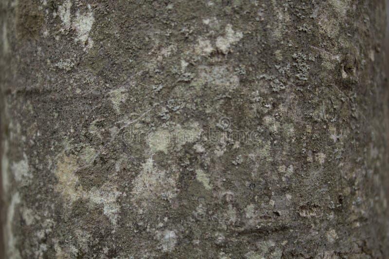 Download BG-Concrete-untreated stock image. Image of concrete - 87734969