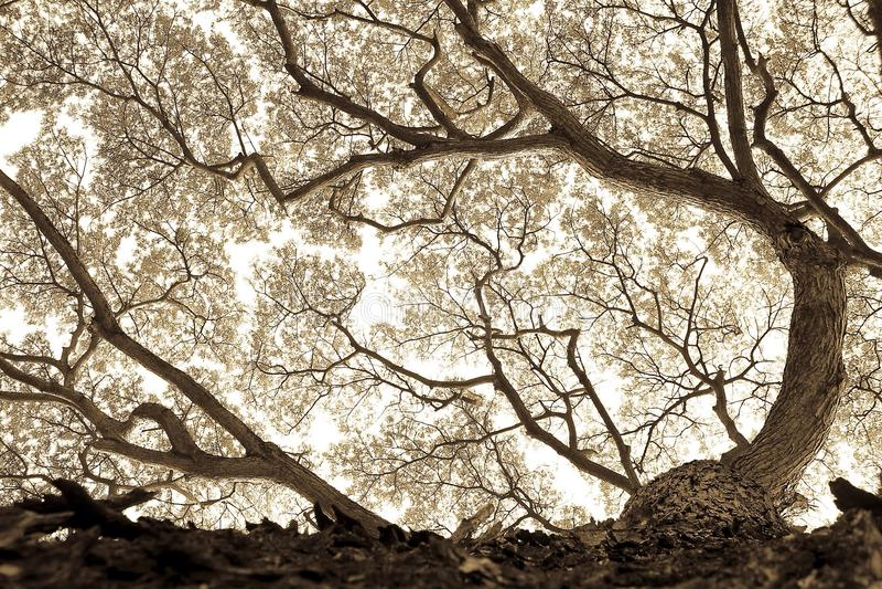 Bg-natur arkivfoto