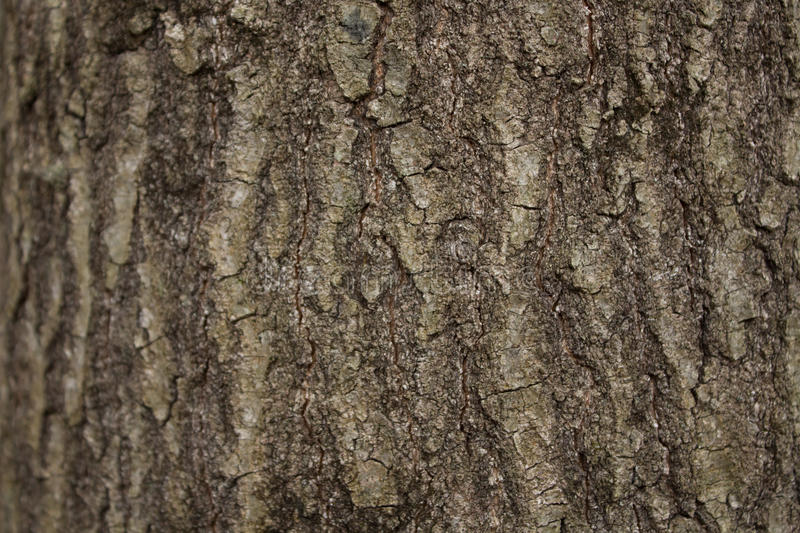 Download BG-Wood-Tree-Bark-light-.CR2 Stock Image - Image of layer, light: 87734989