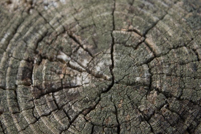 Download BG-Wood-Tree-Trunk-Center stock photo. Image of backgrounds - 87735078