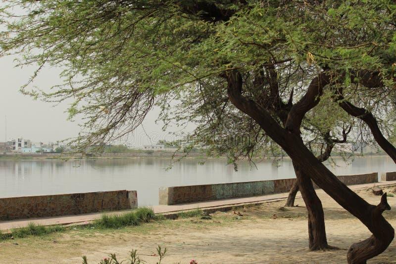 Bhalswa sjö, nordvästliga Delhi, Indien royaltyfria bilder