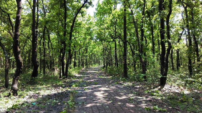 Bhawal国家公园 免版税库存照片