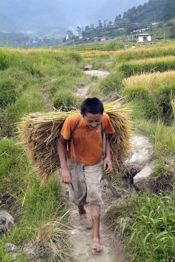Bhután, Wangdi Phodrang, campesino imagen de archivo