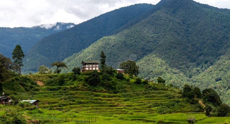 Bhutan-Reis-Felder, Paro-Tal im September 2015 stockbild