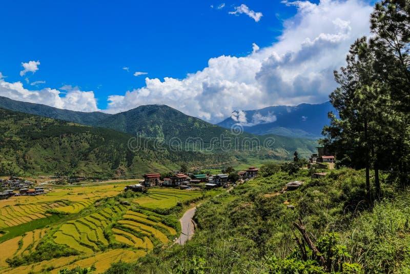 Bhutanesisk by och terrasserat fält på Punakha, Bhutan arkivbild