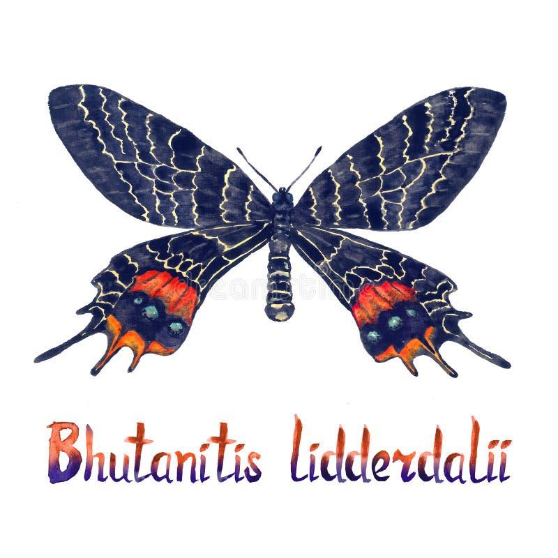 Bhutanitis lidderdalii Bhutan chwała, ręka malował akwareli ilustrację z inskrypcją ilustracji