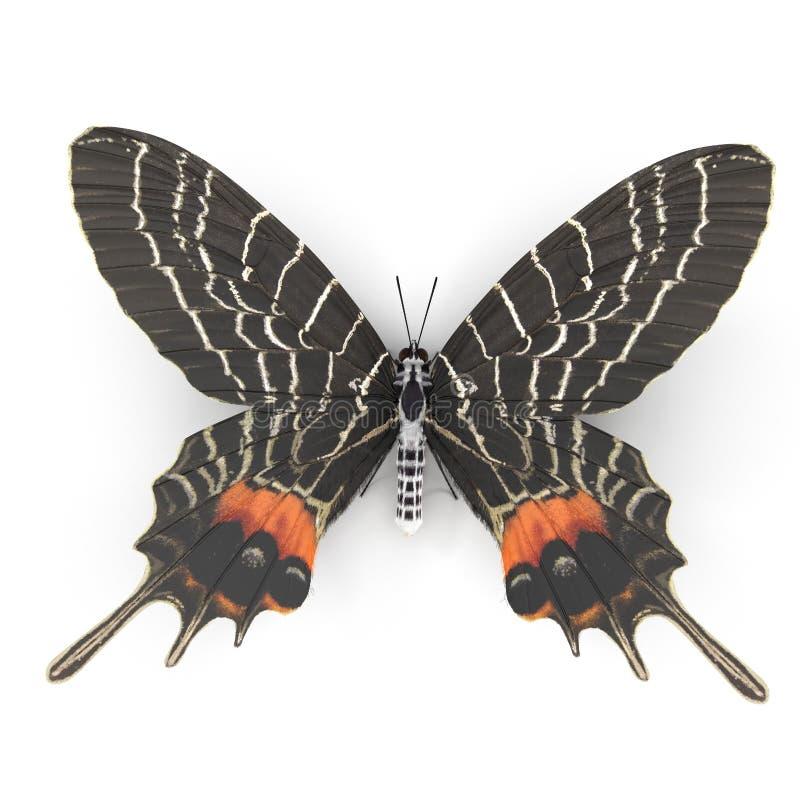 Free Bhutanitis Lidderdalii Or Bhutan Glory Butterfly Swallowtail Isolated On White Background 3D Illustration Stock Photo - 143636840