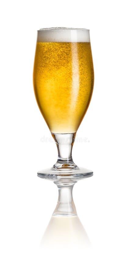 Bière dans un verre de tulipe photographie stock