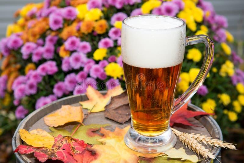 Bière de potiron photographie stock